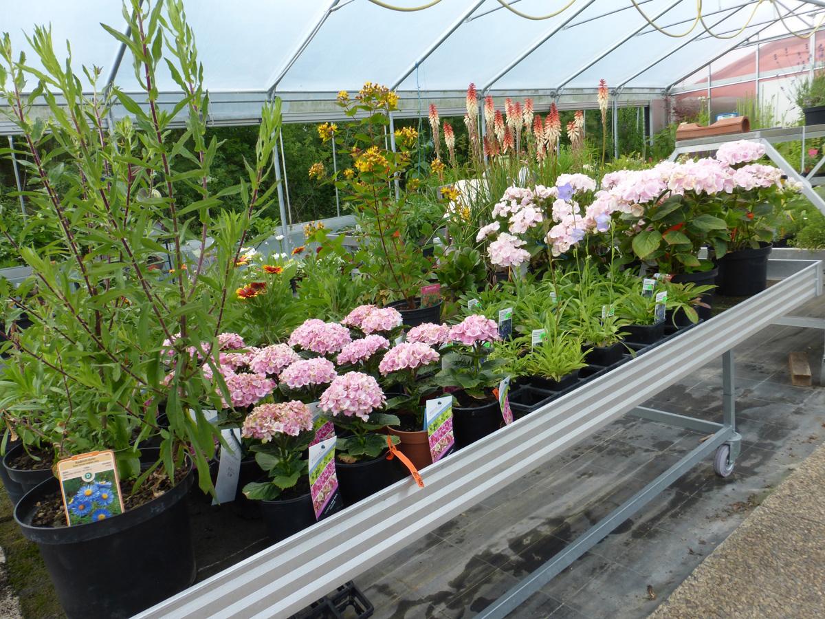 Pflanzen Baumschule Garten Premm Roding