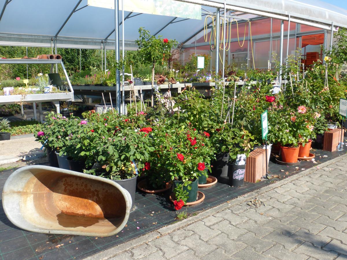 Pflanzen Sträucher Baumschule Garten Premm Roding