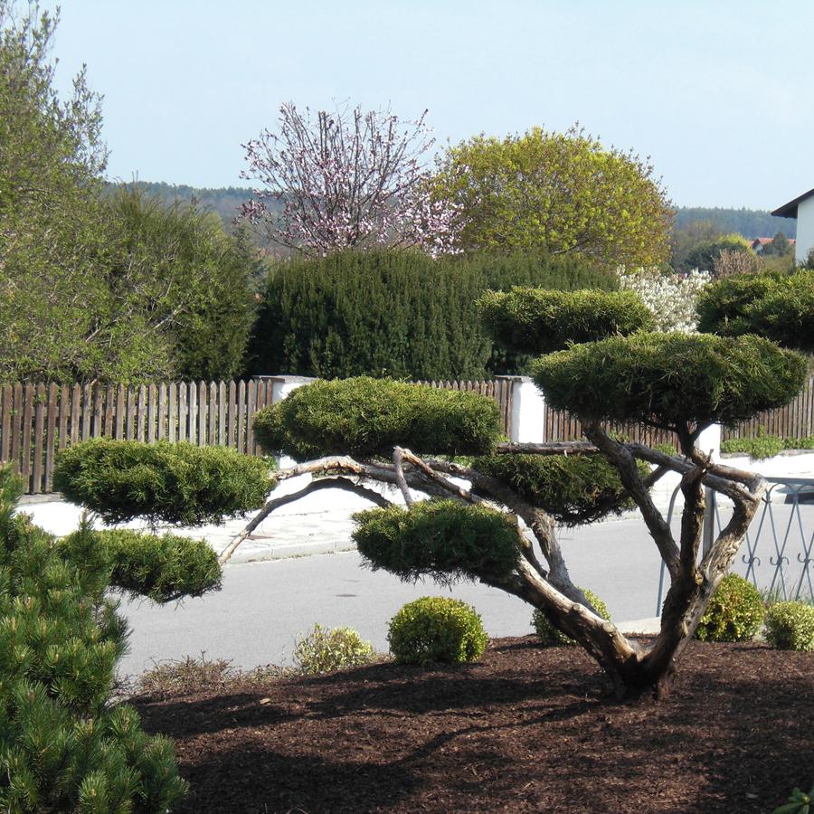 Pflanzarbeiten Vorgarten Garten Premm Roding