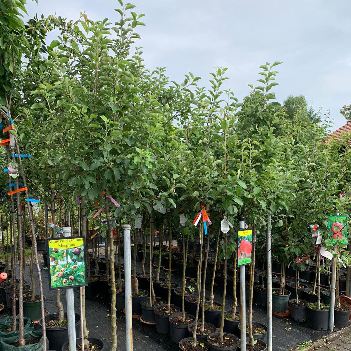 Obstbäume Beerensträucher Garten Premm Roding